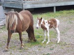 Summer and her colt born may 26 2006  call him Skip