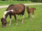 Matacha and her filly NATY. bornmay 10-2011