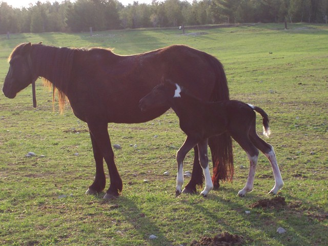 Ebony and her baby colt born april 26 call him Commanche