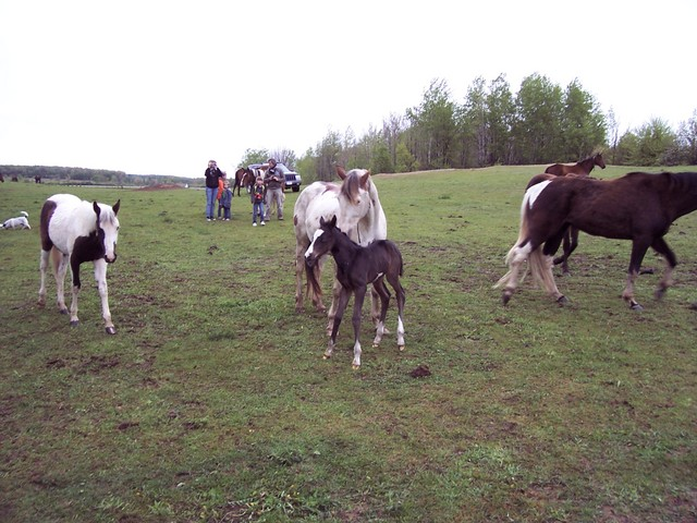 Chitta and her baby colt born may 22 2008 call him Blossom