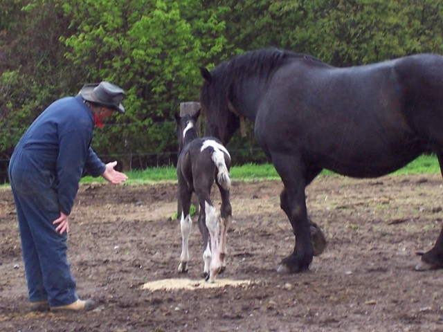 Blacky and her baby filly  born may 12 2008 call her Apache